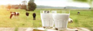 Rappel produit - lait demi-écrémé Grandlait et Grandlait bio - Candia