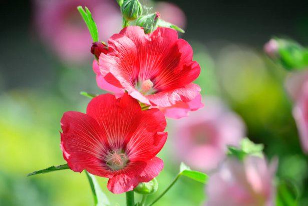 au jardin en juillet, que planter en juillet, que semer en juillet, en juillet au potager, quelles fleurs planter en juillet