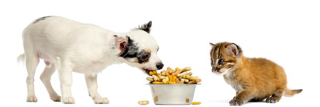 Les croquettes pour chiens et chats ont un impact environnemental considérable