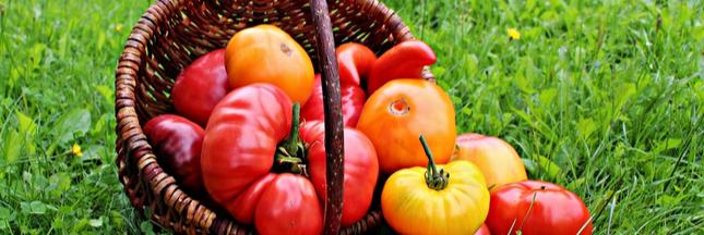 Kokopelli, le semencier qui lutte pour libérer les variétés anciennes