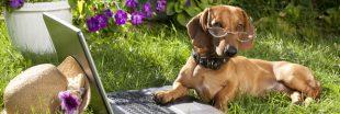 Les chiens peuvent-ils lire dans nos pensées ?