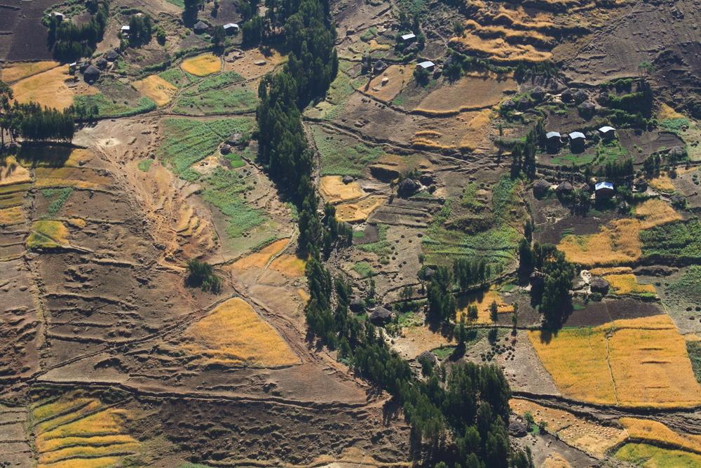 agriculture ethiopie