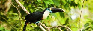 400 nouvelles espèces d'animaux et de plantes découvertes en Amazonie