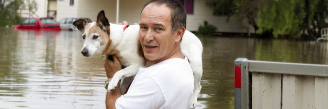 5 histoires d'animaux étonnantes lors du cyclone Harvey