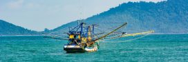 Un tiers des poissons pêchés par la Chine sont inconsommables par l'homme