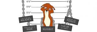 Le renard, animal injustement mal-aimé, en vedette en BD