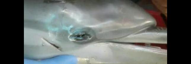 Un bébé dauphin meurt, encerclé par des touristes qui prennent des selfies