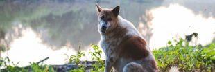 Cyanobactéries en Maine-et-Loire : huit chiens morts après une baignade