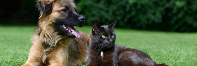 Chiens et chats : les soigner avec des produits naturels