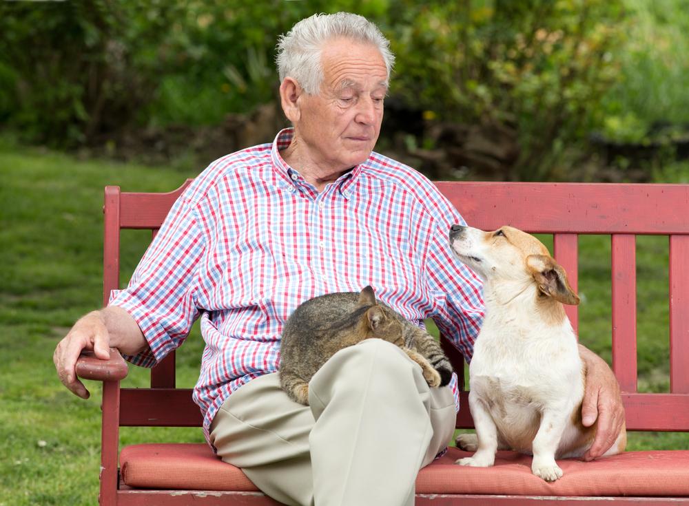 traducteurs pour animaux, communication chien