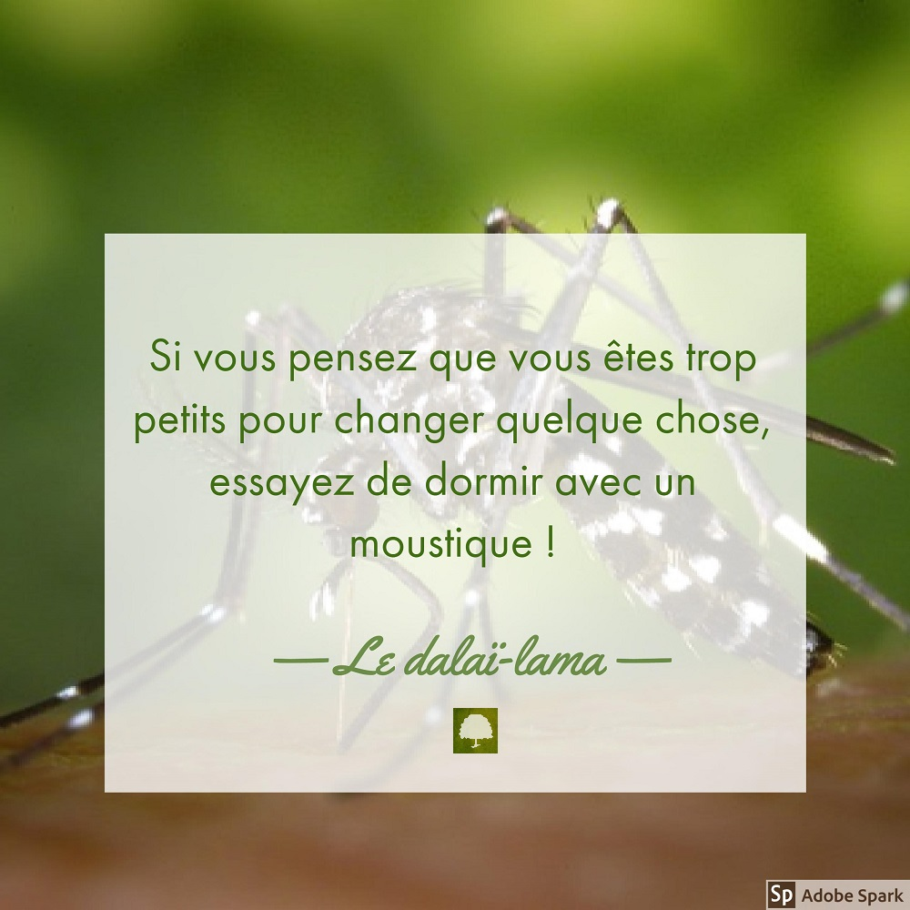moustique citation