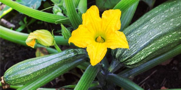 légumes de saison août