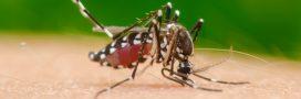 Le cas de dengue recensé en Haute-Garonne est-il contagieux?