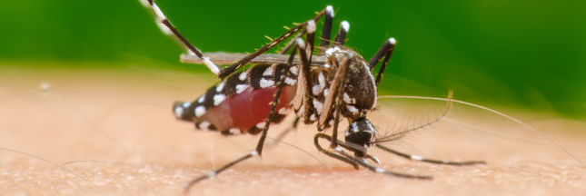Le cas de dengue recensé en Haute-Garonne est-il contagieux ?