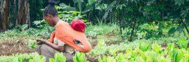 L'Éthiopie primée pour avoir transformé les terres arides du Tigré en champs fertiles
