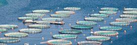 Aquaculture: et si les océans servaient à nourrir l'humanité?
