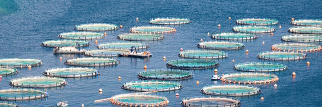 Aquaculture : et si les océans servaient à nourrir l'humanité ?