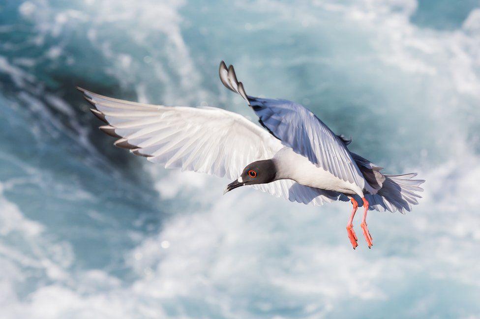 galapagos oiseaux
