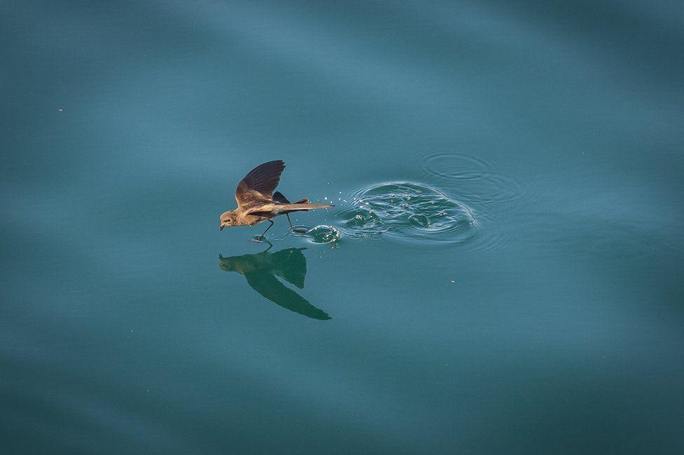 galapagos oiseau