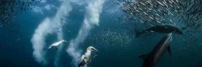 Un photographe plongeur niçois récompensé par le prix National Geographic