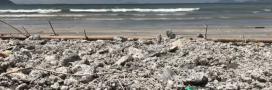 """Une """"marée noire"""" d'huile de palme touche le littoral de Hong Kong"""