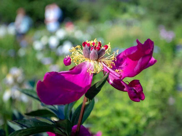 fleurs fanées