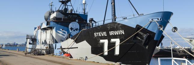 Pourquoi Sea Shepherd renonce à traquer les baleiniers japonais