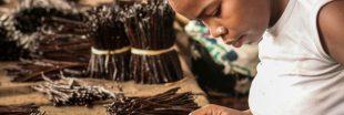 La vanille de Madagascar connaît une flambée des prix sans précédent
