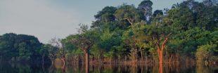 Le Brésil lance un grand projet de reforestation en Amazonie