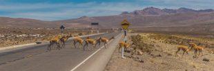 Une start-up brésilienne a trouvé une solution pour réduire de 90% les collisions avec les animaux sur les routes