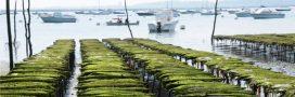 Pourquoi l'aquaculture se développe si lentement en France?