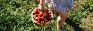 L'auto-cueillette : une pratique locavore en plein essor