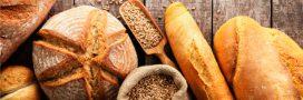 Bientôt du pain sans gluten au blé génétiquement modifié!
