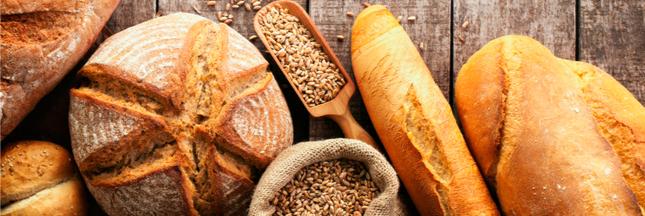Bientôt du pain sans gluten au blé génétiquement modifié !