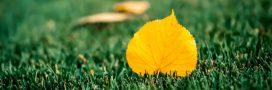 En automne, offrez un nouveau souffle à votre gazon