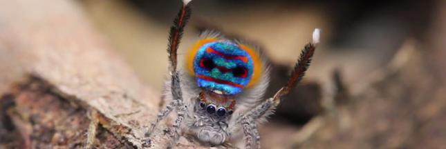 50 nouvelles espèces d'araignées découvertes en Australie