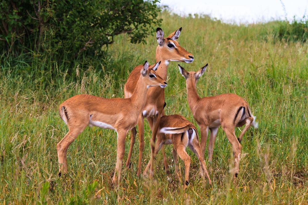 Exceptionnel Ce qu'il faut savoir sur la nouvelle liste rouge des espèces menacées IN24