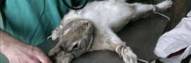 Avec Genoskin, enfin une alternative à l'expérimentation animale!