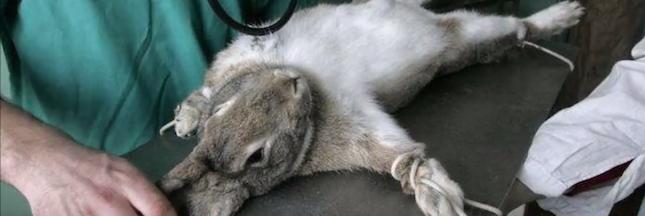 Avec Genoskin, enfin une alternative à l'expérimentation animale !