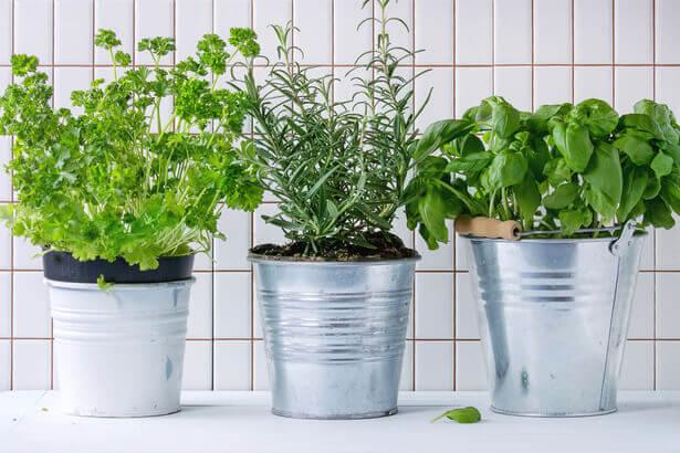 plantes d'intérieur, plus belles plantes d'intérieur, quoi planter en septembre, jardin septembre
