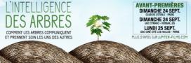 L'Intelligence des arbres: la sortie cinéma à ne pas rater
