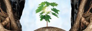L'Intelligence des arbres : la sortie cinéma à ne pas rater