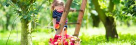 Septembre au jardin bio: les gestes au potager, au verger et pour l'ornement