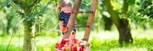 Septembre au jardin bio : les gestes au potager, au verger et pour l'ornement