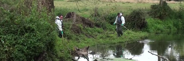 Bretagne : Lactalis confirme le rejet accidentel de matière organique dans une rivière