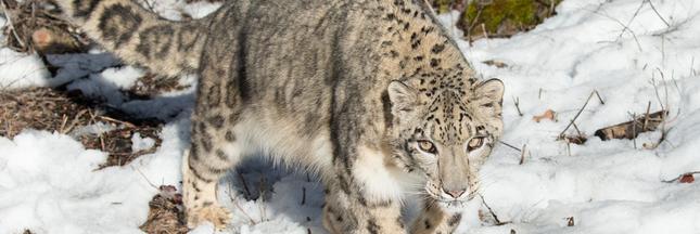 Ce qu'il faut savoir sur la nouvelle liste rouge des espèces menacées
