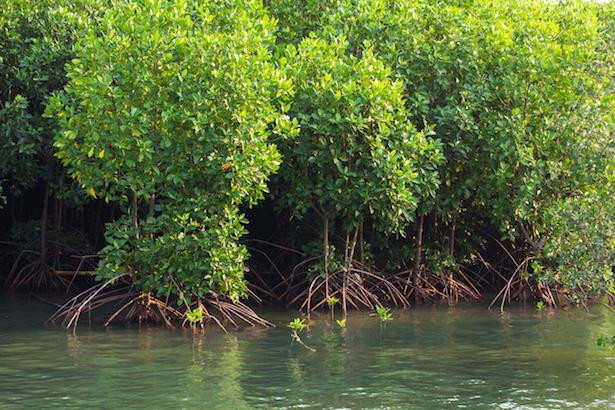 mayotte, mangrove