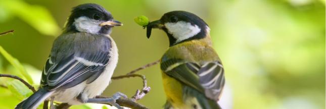 L'Académie des sciences s'inquiète : quelles espèces s'adapteront au changement climatique ?
