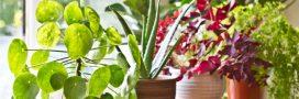 Plantes d'intérieur: que faire en septembre
