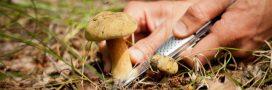 Champignons: des recommandations de la cueillette à l'assiette